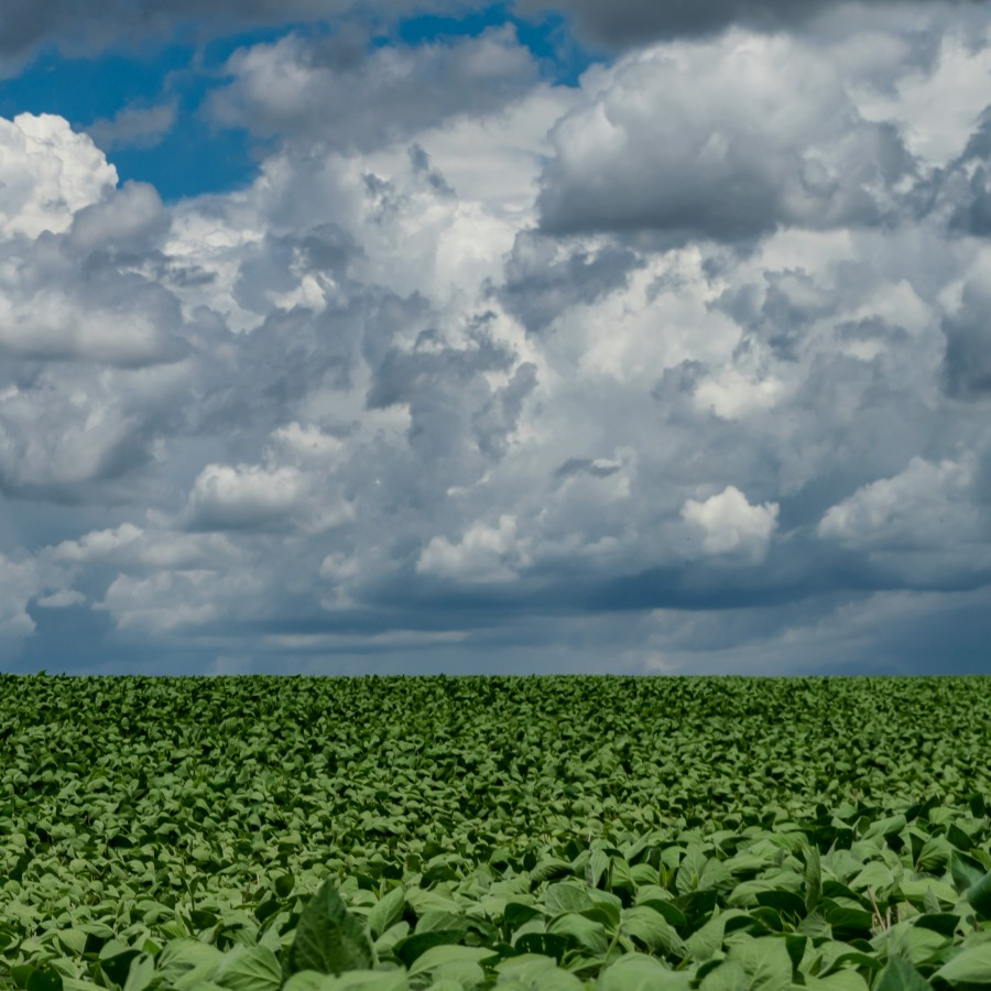 Soybean Field Brazil