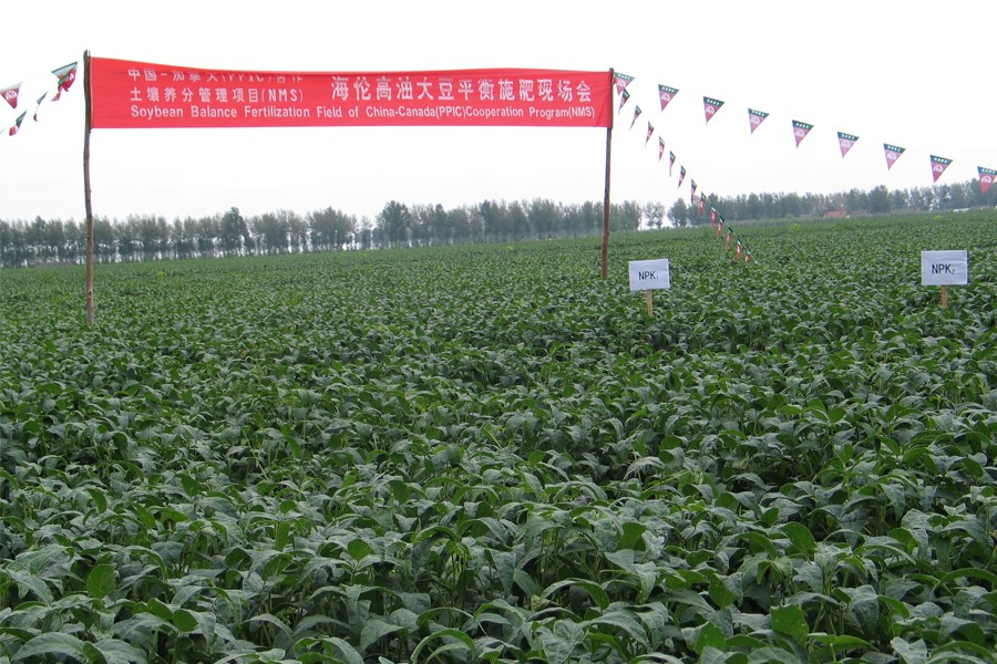 Field in China